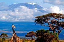 Как россиянам оформить визу в Танзанию