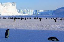 Как правильно эмигрировать в Антарктиду
