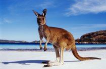Как получить Австралийскую визу