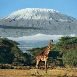 Как гражданам РФ оформить визу в Кению